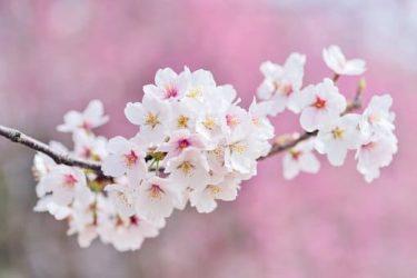 【延期】池田晶子『14歳からの哲学』を読む⑦~「善悪」と「自由」を考える~【初心者大歓迎】